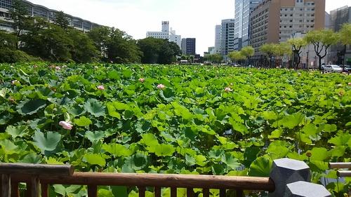 千秋公園.JPG